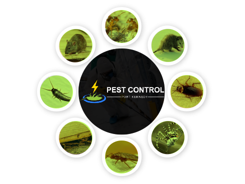 Pest Control Port Kennedy