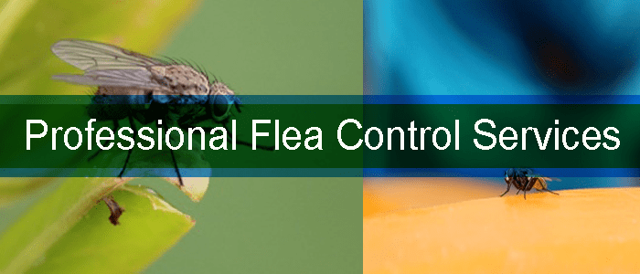 Professional Flea Control Services